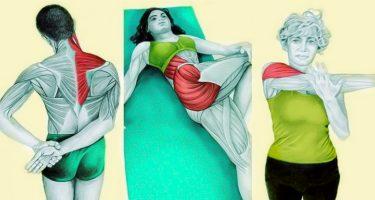 14 упражнений для растяжки мышц всего тела